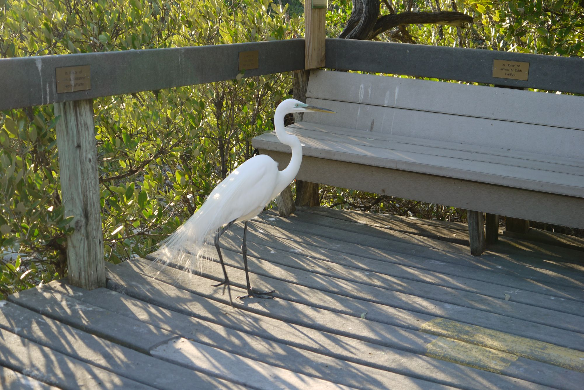 Das Wild Bird Sanctuary - unsere Tourguide