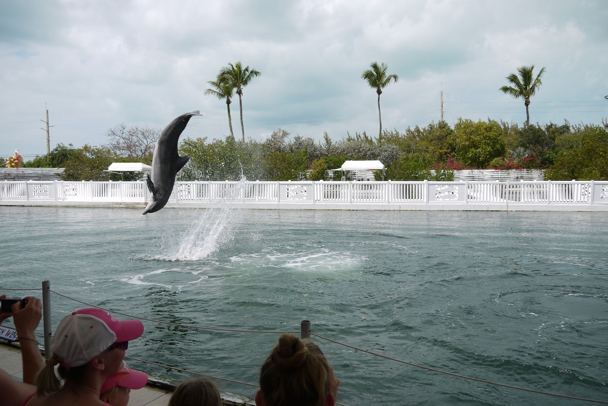 Theater of the Sea, Overseas Hwy, Islamorada, FL 33036, Florida Keys