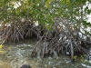 Das Wild Bird Sanctuary -